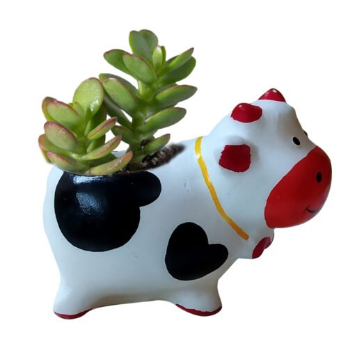 Cow with plant