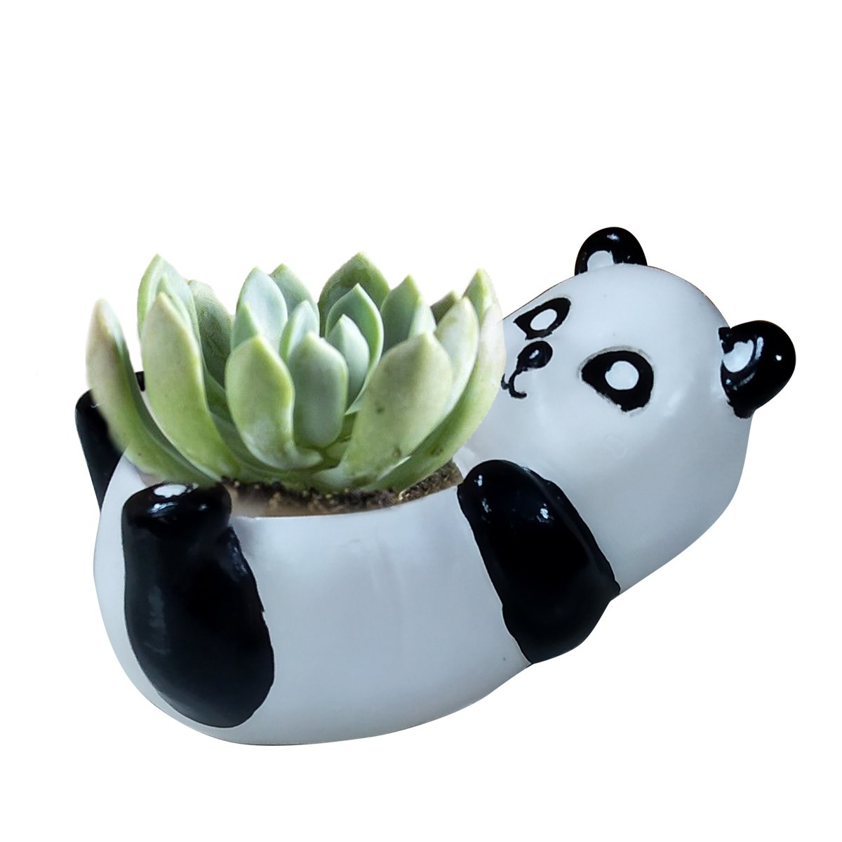 Panda with plant