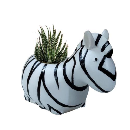 zebra with plant